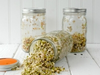 Boulder Locavore Sprouting Jars