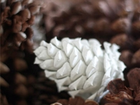 Factory Direct Craft Blog Paint Dipped Pinecones