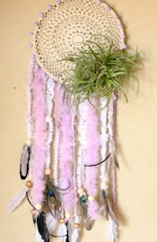 Modern Air Plants Air Plants Dreamcatcher