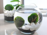 OhMeOhMy Marimo Moss Ball Aquarium
