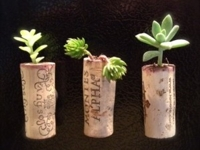 Stylebaggage Succulent Cork Planters