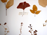 biophilia Anna Macoboy Nature Leaves Wall Art