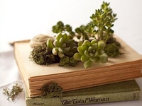 homedit Succulent Book Planters
