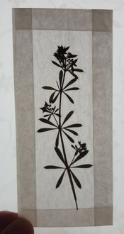 instructables kgklinkel Pressed Flowers Bookmarks
